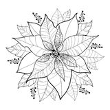 Vector Poinsettia flower or Christmas Star in black isolated on white. Outline flower of Poinsettia for Christmas design Stock Images