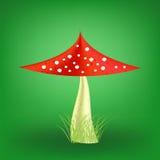 Vector Poisonous Mushroom. Fly Agaric Stock Photography