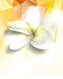 Vector polygon shapes flower concept background Stock Photography
