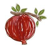Vector pomegranate Royalty Free Stock Photos