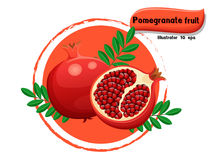 Vector Pomegranate fruit isolated on color background,illustrator 10 eps Stock Images