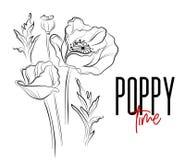 Vector poppy flowers decorative print. Nature flowers black white illustration. Poppier bloom summer plants. Botanical. Art Royalty Free Stock Photography