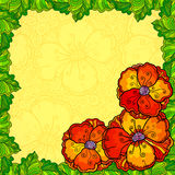 Vector poppy flowers greeting card template Royalty Free Stock Photography