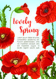 Vector poppy flowers for spring time holidays Stock Photos