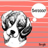 Vector portrait of beagle dog. Hand drawn pet dog illustration. Isolated on Peach background with rose and grey strips. Royalty Free Stock Photography