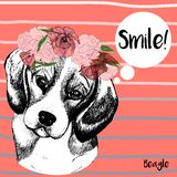 Vector portrait of beagle dog, with wreath. Hand drawn dog illustration. Royalty Free Stock Photos