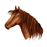 Vector portrait of brown graceful horse mare Stock Photo