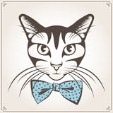 Vector portrait of the cat Stock Photography