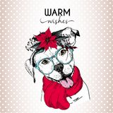 Vector portrait of Christmas dog. English pitbull dog wearing poinsettia wreath, sunglasses and scarf. Royalty Free Stock Photo