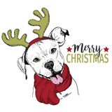 Vector portrait of Christmas dog. Pit bull dog wearing deer horn rim and scarf. Christmas poster, decoration. Stock Photos