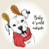 Vector portrait of dog in scarf and leaf ears. Hand drawn dog illustration. Baby it s cold outside. Stock Image