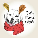 Vector portrait of dog in scarf and leaf ears. Hand drawn dog illustration. Baby it s cold outside. Stock Photo