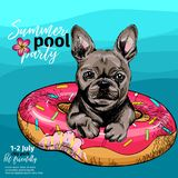 Vector portrait of French bulldog dog swimming in water. Donut float. Summer pool paty illustration. Sea, ocean, beach. Hand drawn pet portait. Poster, t-shirt vector illustration