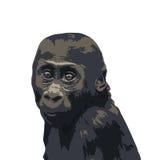 Vector portrait of gorilla baby Stock Image