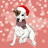 Vector portrait of Jack russel terrier dog wearing santa hat and scarf. Isolated on star and sparkle lights. Sketched Stock Photos