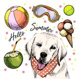 Vector portrait of Labrador retriever dog. Hello summer illustration. Coconut cocktail, balls, ice cream. Hand drawn pet. Portait. Poster, t-shirt print Royalty Free Stock Images