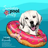 Vector portrait of Labrador retriever dog swims in water. Donut float. Summer pool paty illustration. Sea, ocean, beach. Hand drawn pet portait. Poster, t Royalty Free Stock Images