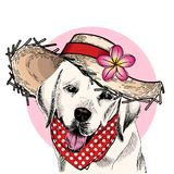 Vector portrait of Labrador retriever dog wearing straw hat, flower and polka dot bandana. Summer fashion illustration. Hand drawn pet portait. Poster, t-shirt Stock Photography