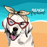 Vector portrait of Labrador retriever dog wears sunglasses, retro bandana. Summer fashion illustration. Sea, beach. Ocean. Hand drawn pet portait. Poster, t Royalty Free Stock Images
