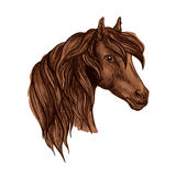 Vector portrait of noble brown horse mare Royalty Free Stock Photo
