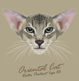 Vector Portrait of Oriental Cat Royalty Free Stock Images