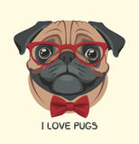 Vector portrait of a pug wearing glasses Stock Photos