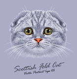 Vector Portrait of Scottish Fold Cat Royalty Free Stock Images