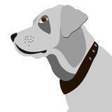 Vector Portrait of white Labrador retriever Royalty Free Stock Photos