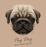 Vector Portrait of young Pug Dog