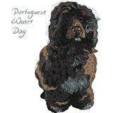 Vector Portuguese Water Dog Royalty Free Stock Images