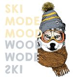 Vector poster with close up portrait of siberian husky dog.Ski mode mood. Puppy wearing beanie, scarf and goggles. Hand drawn illustration.Use for sport shop Royalty Free Stock Images