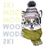 Vector poster with close up portrait of welsh corgi dog.Ski mode mood. Puppy wearing beanie, scarf, goggles. Hand drawn illustration. Use for sport shop stock illustration