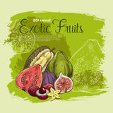 Vector poster of exotic tropical fruits Royalty Free Stock Images