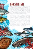 Vector poster of fresh fish or sea food. Fresh fish poster for sea food or fish market. Vector fishing or fisherman catch of trout, salmon or tuna and herring Royalty Free Stock Photos