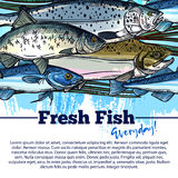 Vector poster for fresh fish or seafood market. Fresh fish market poster for seafood shop or fishing store. Vector design of fisher big catch of sea food and Royalty Free Stock Photos