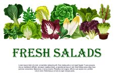 Vector poster of fresh salads leafy vegetables Stock Images
