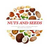 Vector poster of nuts, beans and fruit seeds. Nuts and fruit seeds or beans poster. Vector peanut, hazelnut or walnut and pistachio kernels, almond nut or legume Stock Images