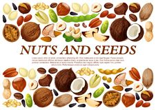 Vector poster of nuts and fruit seeds. Nuts and fruit seeds or beans poster. Vector peanut or coconut and hazelnut, pistachio or almond walnut and legume bean Royalty Free Stock Image