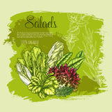 Vector poster salads or leafy lettuce vegetables Stock Photo