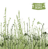 Vector poster with silhouettes of flowers and grass. Royalty Free Stock Images
