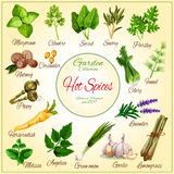 Vector poster of spice seasonings herb flavorings Royalty Free Stock Images