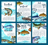 Vector posters for fresh fish seafood market. Fish posters set for seafood or fish food market. Vector brochure template design of sea fishing or fisherman big Royalty Free Stock Photography