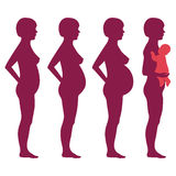 Vector pregnancy stages Royalty Free Stock Image