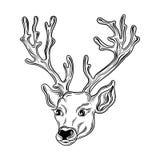 Vector principal de los ciervos libre illustration