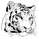 Vector principal del monocromo del drenaje de la mano del tigre Imágenes de archivo libres de regalías