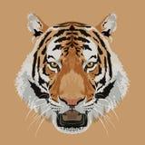 Vector principal del tigre Imagenes de archivo