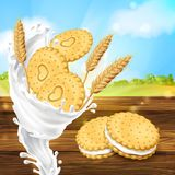 Vector promotion banner for milky cookies brand. Vector realistic colorful background, promotion banner with cookies, crispy crackers with milky splash and wheat Royalty Free Stock Photos