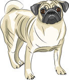 Vector. Pug dog breed. Royalty Free Stock Images