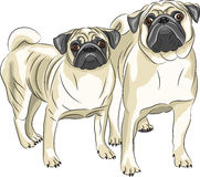 Vector. Pug dog breed. Stock Photography