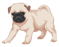 Vector of pug dog. Royalty Free Stock Image